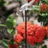 Pixilights Multi Coloured Solar Garden Lights x2, Solar Hummingbird Lights product image
